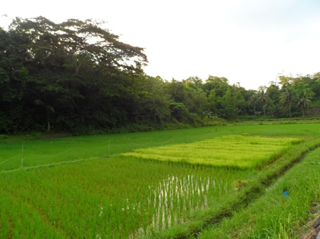 Rice paddy, and it's by the road ...