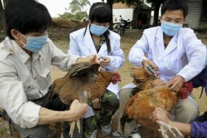birdflu_china--621x414