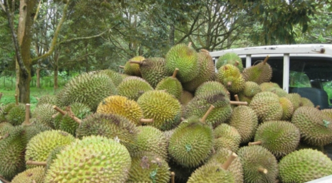 Durian: Southeast Asia's King of Fruits