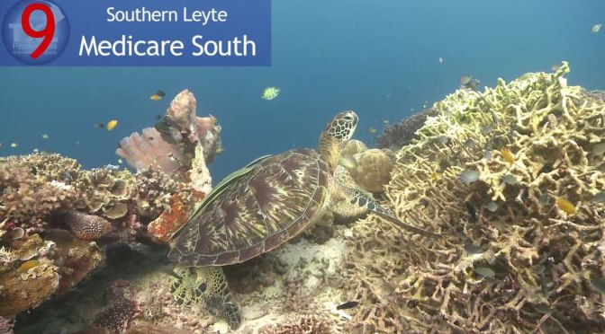 Travel time top dive sites in the philippines consumer live - Dive time tours ...
