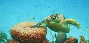 010916 snorkeling