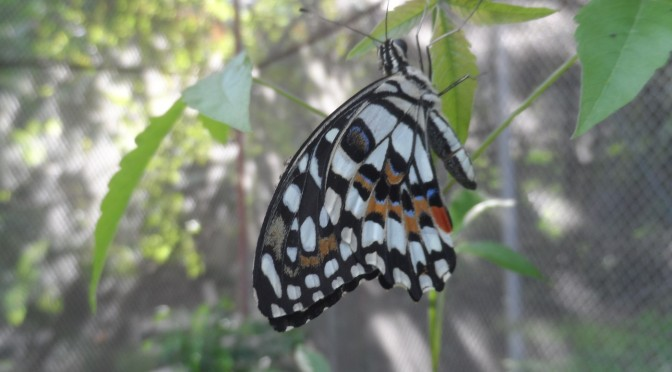 In Pictures: Jumalon Butterfly Sanctuary and Art Gallery (Cebu City)
