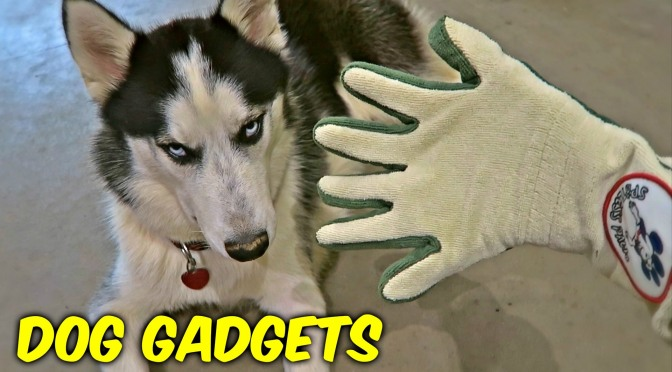 Consumer Video: 7 Dog Gadgets Put to the Test