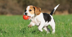 0715 puppy