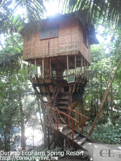 A tree house for campers' of 6