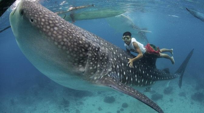 Top 10 Beach Activities in the Philippines