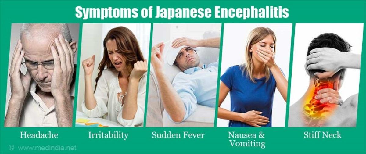 japanese encephalitis - photo #17